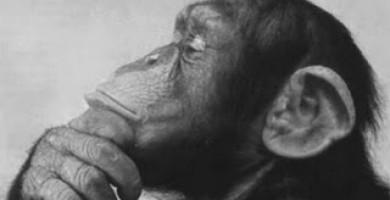 Darwin!! kami ini manusia atau kera?