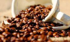 Jual Kopi Robusta Jogja dan Coffee VVIP dengan Segudang Manfaat