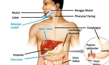 4 Tanda Pencernaan Anda Sehat serta Berperan Baik