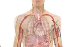 Gejala dan Penyebab Uremia Tinggi